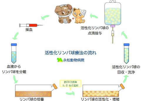 活性化リンパ球療法の流れ
